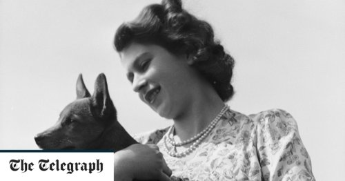 Why the Queen's dogs could help her grieve