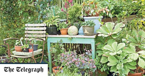 The secret to the ultimate rustic garden? These bargain vintage buys