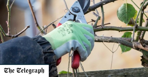 A step-by-step guide to pruning a climbing rose, by gardening expert Helen Yemm