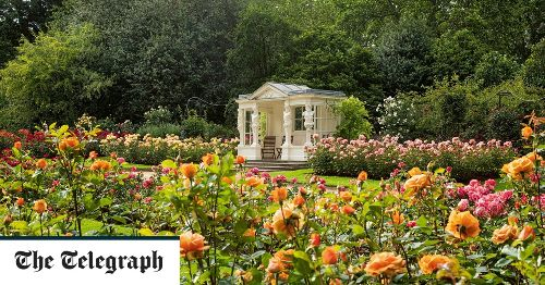 Buckingham Palace's garden secrets: island is overgrown and dead trees left for insects