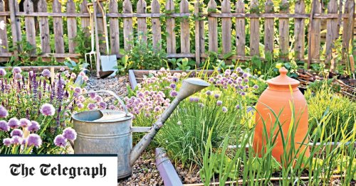 What to sow now for a flourishing vegetable patch until autumn