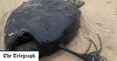 Pictures of the Day: Monstrous deep sea fish found on California beach