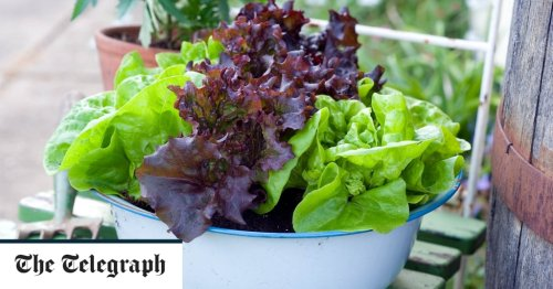 Raised Bed, Container, Square Foot, Small Space Gardening cover image