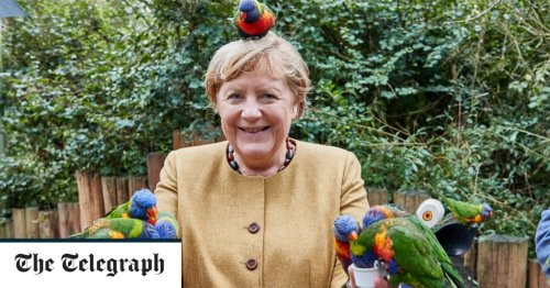 Pictures of the Day: Angela Merkel with a parrot on her head visiting a bird park