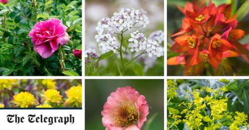 30 of the best shade-loving plants