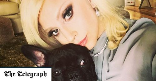 Lady Gaga's dog walker shot four times and two of of her French Bulldogs stolen