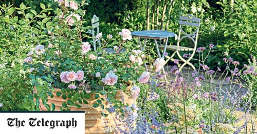 The best roses to grow in pots on a small patio or balcony