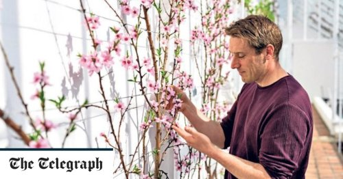 Two hours to spare? Six easy jobs that will transform your garden