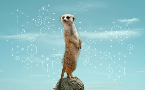 A DNA Zoo Maps the Mysteries of All Creatures Great and Small