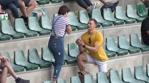 A cockatoo proposed to me!