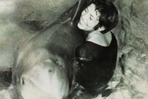 Peter the dolphin 'killed himself' after being left heartbroken by human 'lover'