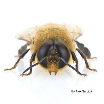 It's a drone's life - The Apiarist