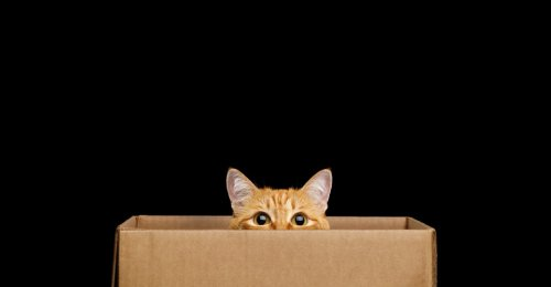 Pay No Attention to That Cat Inside a Box
