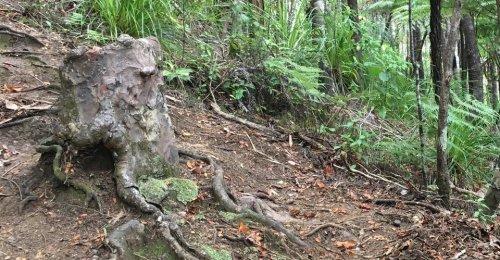 The Stump That Didn't Die