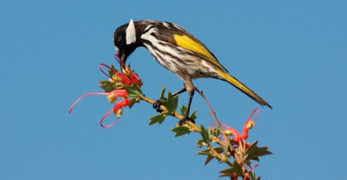 The Story of Songbirds Is a Story of Sugar