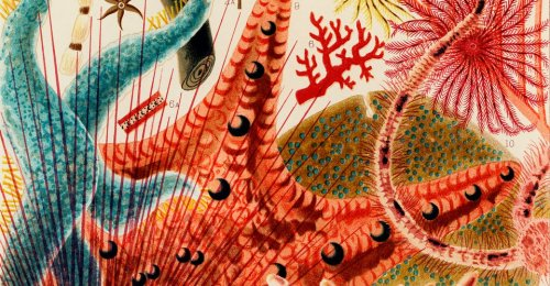 William Saville-Kent: Marine Biology's Unsolved Murder Mystery - The Atlantic