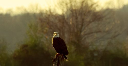 What Caused the Bald Eagle Massacre of 1996? - The Atlantic