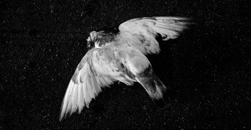 Then the Birds Began to Die
