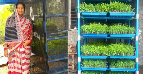 Startup's Low-Cost Hydroponic Innovation Can Solve India's Acute Fodder Crisis