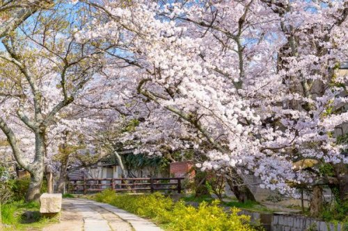 2 Day Itinerary Kyoto: 48 Hours In The City