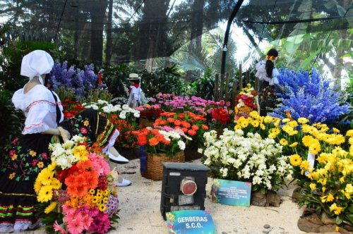 Feria de Las Flores Medellin – The Most Instagrammable Week of the Year