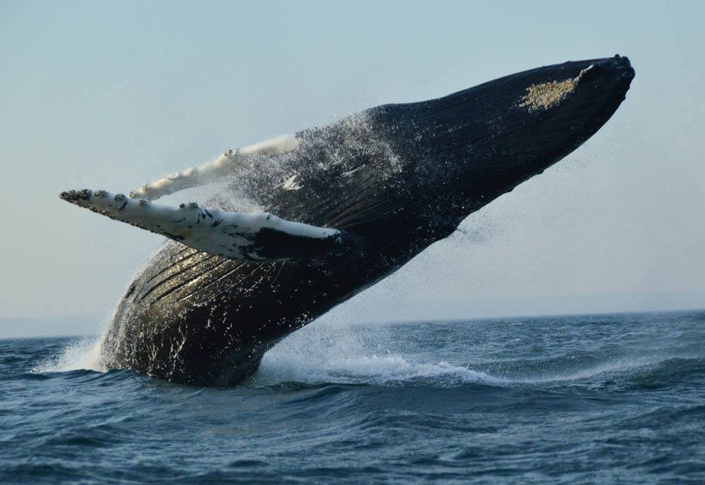 Whale Watching St Andrews – a How-To Guide