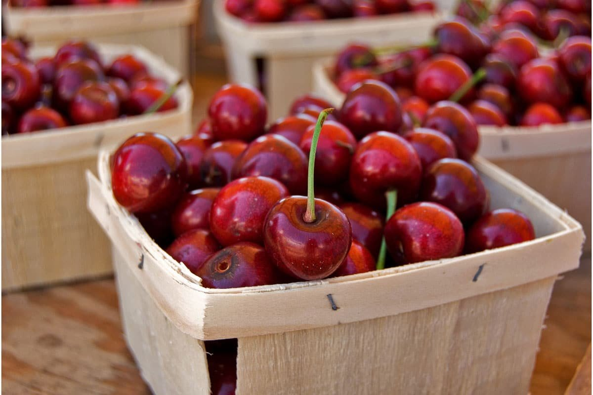 15 Best Cherry Picking in Michigan Farms and Orchards