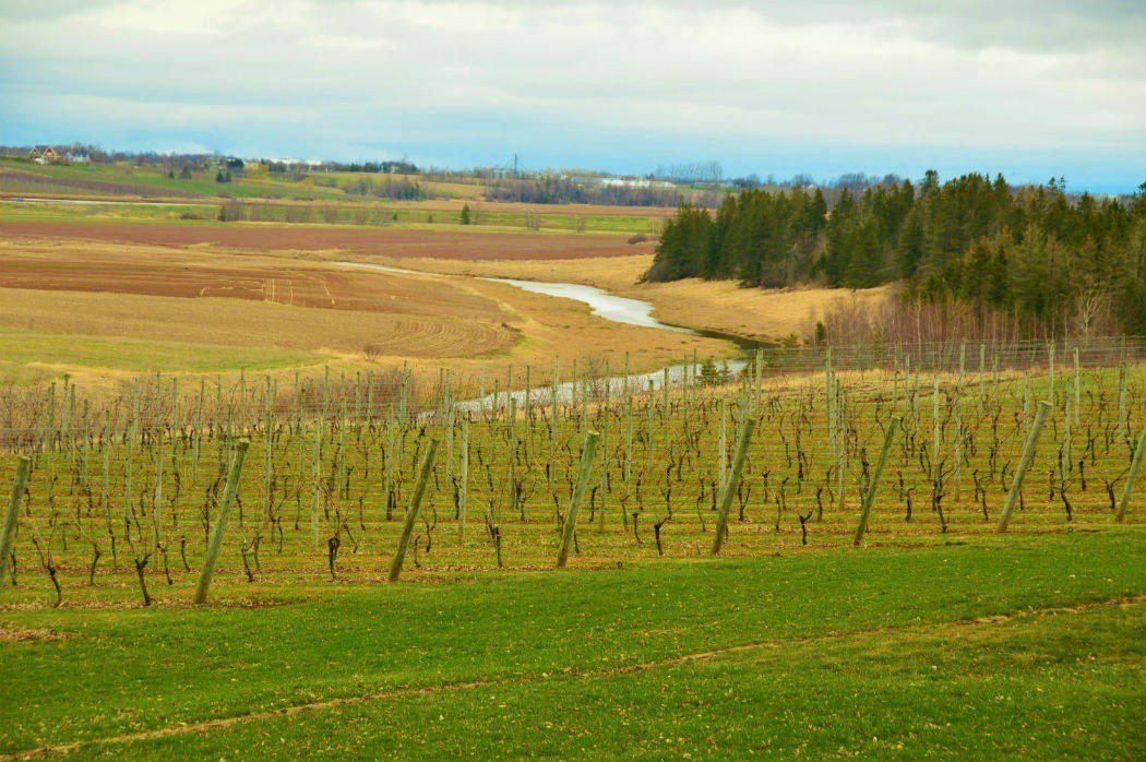 Wolfville Wineries Ultimate Travel Guide 2018