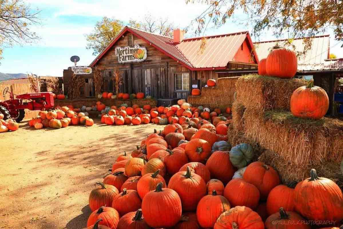 13 Best Pumpkin Patches in Arizona for Picking