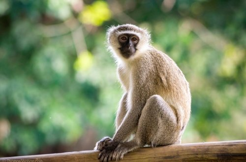 Monkey bites woman in Myrtle Beach, escaped from local safari park