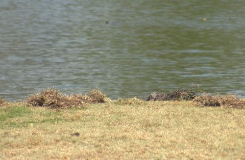 Dead man found in Sumter County golf course, identity released