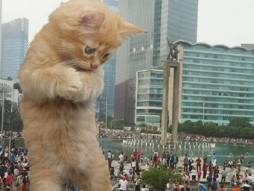 Meow and Welcome to Cat Saturday (30 Photos)