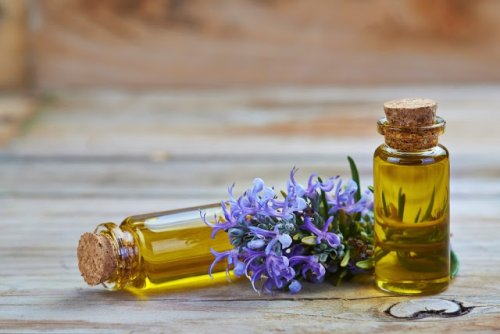 Use Rosemary Oil To Boost Mental Stamina and Increase Brain Activity