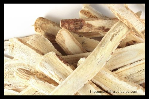 Health Benefits of the Astragalus Root (The Magic Traditional Chinese Herb)