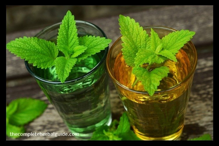 Top 6 Herbs That Naturally Repel Fleas