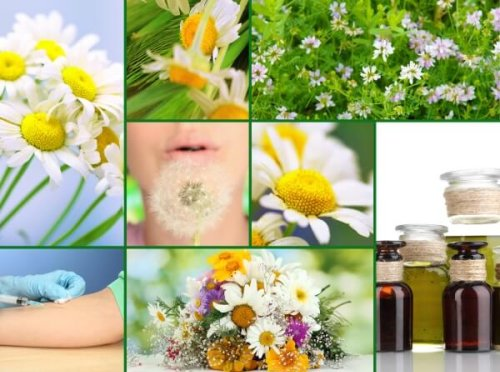 6 Home Remedies for Allergies