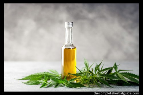 The Benefits vs. Risks of using CBD - The Complete Herbal Guide