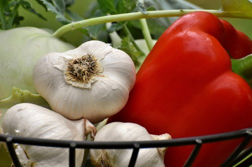 Plant with Benefits: The Health Benefits of Garlic and How to Grow it at Home