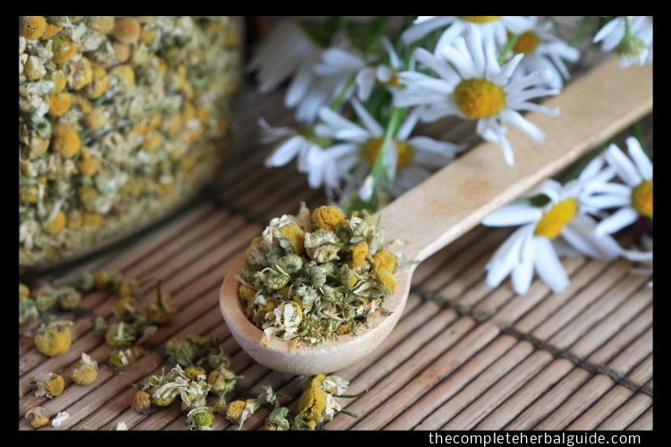 Catching Z's Left and Right: The Top Herbal Remedies for Better Sleep