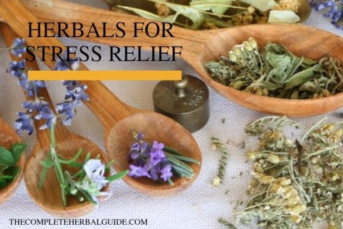Anxiety and Herbal Remedies: 8 Herbal Remedies for Immediate Stress Relief