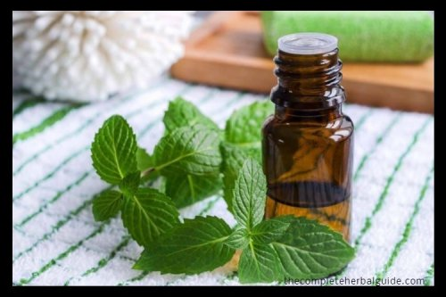 Top 14 Essential Oils for Energy (Plus 7 Recipes and Application Tips)