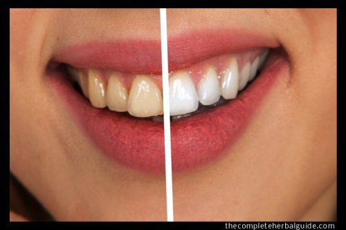 Tips for Maintaining Good Oral Hygiene - The Complete Herbal Guide
