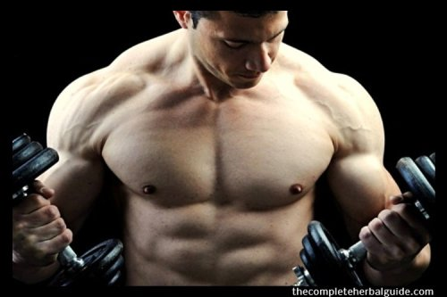 5 Home Workouts That Will Actually Help You Build Muscle - The Complete Herbal Guide