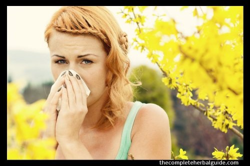Home Remedies for Allergies: Relieve All Your Allergies Naturally - The Complete Herbal Guide