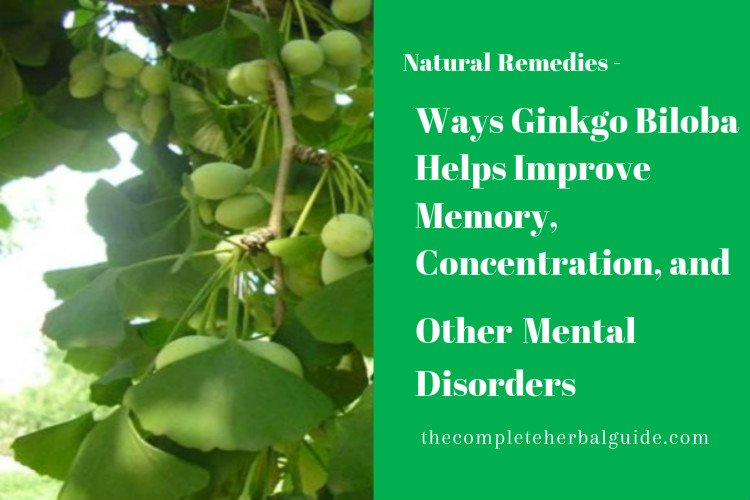 Ways Ginkgo Biloba Helps Improve Memory, Concentration, and Other Mental Disorders