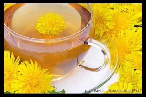 Medicinal Properties and Benefits of Dandelion Tea
