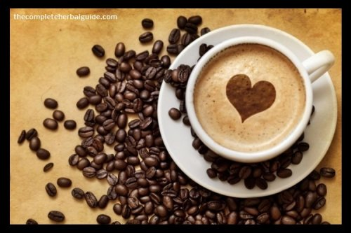 Organo Gold Coffee Healthier Than The Average Coffee? - The Complete Herbal Guide