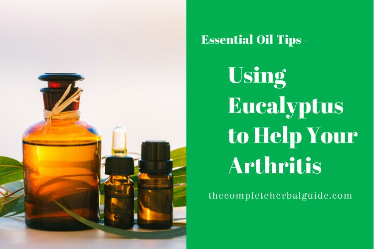 Using Eucalyptus to Help Your Arthritis