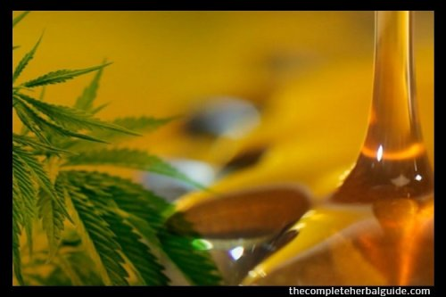 What are the Real Benefits of CBD Oil? - The Complete Herbal Guide