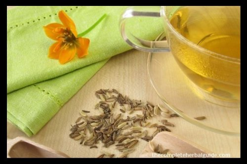 20 Fabulous Fennel Tea Benefits [Including a Delicious Fennel Tea Recipe] - The Complete Herbal Guide
